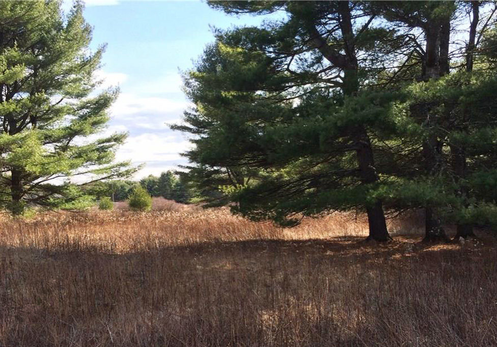 forest and field vacant land